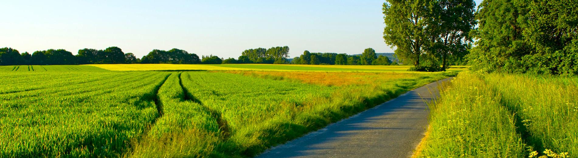 The-narrow-road